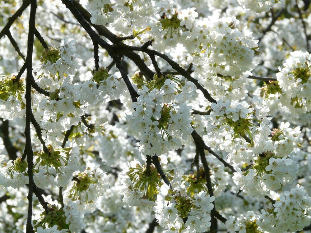Pierwszy dzień wiosny a przesilenie wiosenne!
